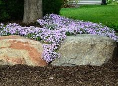 The Best Low-Maintenance Ground Covers for Your Garden Few ground covers ever look as beautiful as creeping phlox in spring, when it produces an explosion of fragrant, star-shaped, pastel-color flowers. Ground Cover Flowers, Purple Ground Cover, Ground Cover Plants Shade, Phlox Flowers, Planting Flowers, Flowers Garden, Moss Phlox, Gardens, Flowers