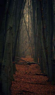 Autumn, The Enchanted Wood