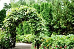 Gemüsegarten gestalten: 9 Ideen für einen hübschen Garten - Wurzelwerk Outdoor Living, Home And Garden, Fruit, Plants, Tricks, Gardening, Weddings, House, Inspiration