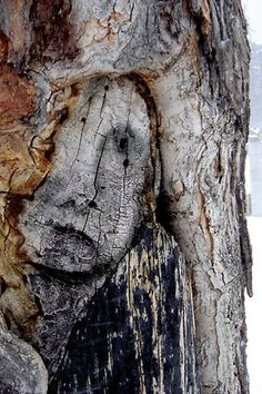 Eerie Face in Tree