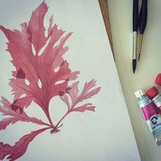 Seaweed in watercolor for patterndesign. Pattern for sale @ patternbank.com/shock    #aquarel #watercolor #watercolour #watercolorpainting #handpainted #patterndesign #patterndesigner #textiledesign #surfacepatterndesign #jaccoschokker #seaweed