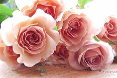 roses named Julia ミルクティ色のバラ、品種はジュリア  *・*・*・*・* ジュリアの花言葉は、「努力の人」 In the...