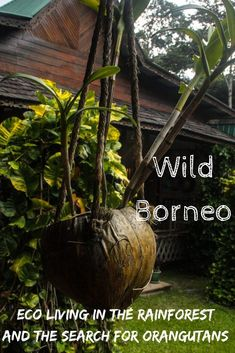 If you have ever wanted to search for orangutans in the wild, Borneo is the place to go. Stay in an eco friendly lodge in the middle of the rainforest and explore this spectacular natural wonder. Amazing Destinations, Travel Destinations, Orangutans, How To Start Conversations, Travel Articles, Travel Tips, Unique Hotels, Majestic Animals, Group Travel