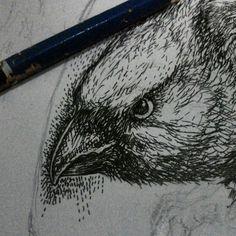 Iki jenenge ndas manuk #gambar #manuk #burung #drawing #basukiadx