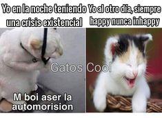 "Gatos Cool en Instagram: "". . . . . #memesdegatoscool #gatoscool😸 #gatos_cool #automorision #gatos #gato"""
