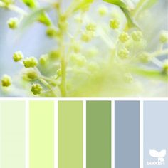 today's inspiration image for { mimosa hues } is by @derkleineklecks ... thank you, Julia, for another wonderful #SeedsColor image share!