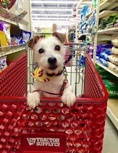 Choice Jack Russell Terrier Photo                                                                                                                                                                                 More