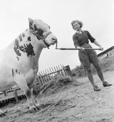 Land Girl Iris Joyce leads a bull at a farm somewhere in Britain. Iris had previously been a typist but after four weeks training at the Northampton Institute of Agriculture, she is now confident to deal with such animals and all aspects of her work in the Women's Land Army ~