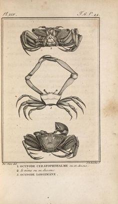Vintage Crabs