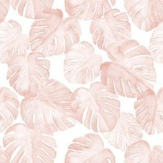 Colorful fabrics digitally printed by Spoonflower - (small scale) watercolor monstera leaf - dusty pink