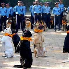 …and queens that they are. | 18 Outrageously Cute Photos Of Dogs Being Celebrated At Nepal's Wonderful Dog Festival