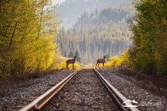 The Wrong Side of the Tracks by Callum Snape
