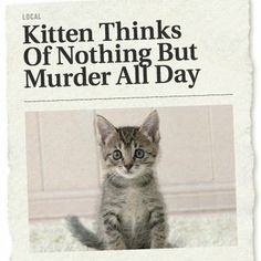 The Onion: Kitten Thinks Of Nothing But Murder All Day