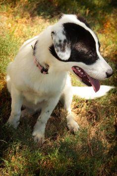 8/13/16 Daphne - URGENT - City of Corsicana Animal Shelter, Corsicana, Texas - ADOPT OR…