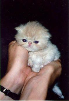 Sweetharmony's SnowBall, born 18th June 1998