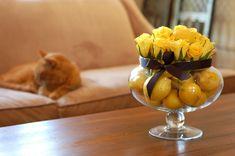 Yellowroseslemonkittyoncouch | by MrsLimestone
