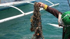 Philippines project turns 'ghost' fishing nets into carpets | Public Radio International