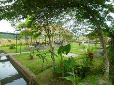Panorama verde | Puro Bali