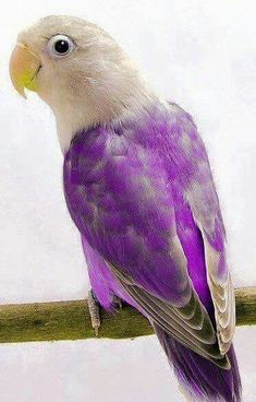 A so peaceful parrot