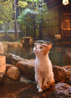 Cute cat outdoors 😍  #cat #cutecat #adorable #aww Type 3, Theater, Theatres, Teatro, Drama Theater