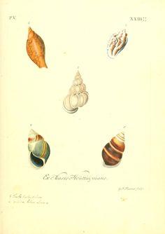 1764 v 2 ptie 4 6 les delices des yeux et de l 39 esprit ou collection generale des - Differentes especes de pins ...