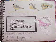 The Unplugged Family: {Winter} Backyard Bird Studies & Bird Nature Journal pages (Charlotte Mason Monday)