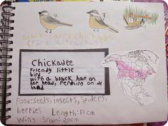 The Unplugged Family: {Winter} Backyard Bird Studies & Bird Nature Journal pages  (Charlotte Mason Monday)