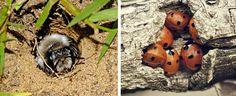 Vysněná zahrada: Nejjednodušší hmyzí domečky
