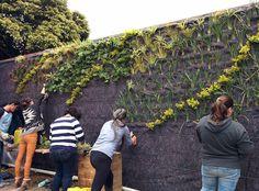 Curso de jardines verticales Bogotá