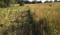 Rotational grazing or Intensive grazing done naturally and organically.