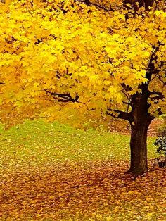 21 Ideas For Nature Wallpaper Iphone Trees Autumn Leaves Autumn Scenery, Autumn Trees, Autumn Leaves, Golden Leaves, Autumn Forest, Tree Wallpaper, Nature Wallpaper, Iphone Wallpaper, Flor Magnolia