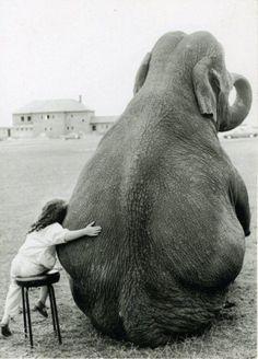 #assis #éléphant
