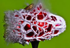 Creative Stock Photography Artist Alan Seyler has created a series of pictures showing everyday items exploding. Alan specializes in high-speed shooting High Speed Photography, Action Photography, Artistic Photography, High Shutter Speed, Science Art, Photomontage, Graphic Design Art, Mind Blown, Cool Art