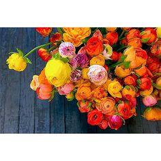 Ranunculus at Local Color Flowers
