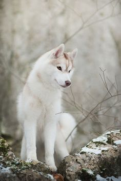 Icey dog!