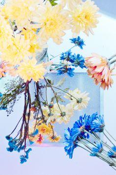 Cru Camara 'Neon' Photography – Trendland Online Magazine Curating the Web since 2006 Neon Photography, Fine Art Photography, Neon Design, Floral Design, Wallpaper Headboard, Color Stories, Gradient Color, Installation Art, Art Direction