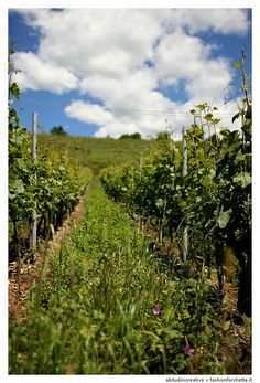 Famiglia Cottini. Monte Zovo Winery. Verona, Italy.