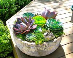 See these fascinating succulent planting ideas. You wll definitely find them int. - See these fascinating succulent planting ideas. You wll definitely find them interesting. Succulent Landscaping, Succulent Gardening, Succulent Pots, Cacti And Succulents, Planting Succulents, Garden Pots, Container Gardening, Organic Gardening, Balcony Garden