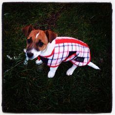 Molly Dog Coats, Corgi, Animals, Coats For Dogs, Animaux, Corgis, Animal, Animales, Animais