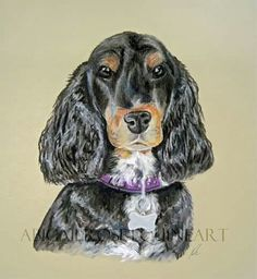Soft pastel on pastel board This beautiful English Cocker spaniel was commissioned as a birthday gift! For your own personal piece of your four legged friend, please contact abigail.rose06@gmail.com or visit www.facebook.com/abigailrose.equineart