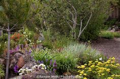 drought tolerant plants california | Drought tolerant mixed border garden bed with trees, shrubs ...