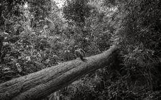 © Pierre de Vallombreuse - Enfant songeur sur un arbre - 2016 - Peuple Palawan, PHILIPPINES  2016