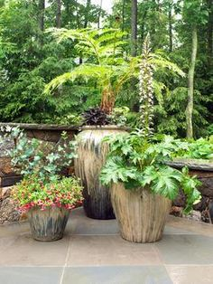 CI-westoverLD-Photog-Rich-Pomerantz_patio-plants_s3x4