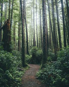 Hiking In Olympic National Park by Dylan Furst - Photo 138704293 - 500px