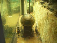 Seit nunmehr acht Jahren betreibe ich meine Aquarien mit CO2 aus der Druckflasche. In dieser Zeit habe ich eine für den Privatgebrauch beachtliche Anzahl an Reaktoren durchgemacht. Normalerweise kann man da auch nicht viel falsch machen, vorausgesetzt man sucht sich nach Herstellerangaben auch einen geeigneten Reaktor aus.   #DennerleCyclo #JBLProFloraDirect #JBLTaifun #Precision1000 #serafloreCO2 #UPAtomizer
