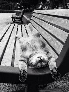 Photos of cats sleeping
