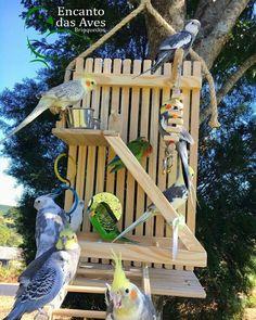 Brinquedo P Calopsita Playground + Escadão Encanto Das Aves - R$ 275,00 em Mercado Livre Homemade Bird Toys, Diy Bird Toys, Diy Bird Cage, Bird Cage Stand, Bird Play Gym, Bird Aviary, Parrot Toys, Cockatiel, Parakeet