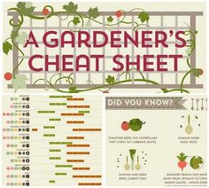 The Ultimate Gardners Cheat Sheet - Spring, Summer And Winter Gardening