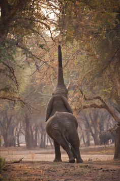 Zambia by Etienne Oosthuizen