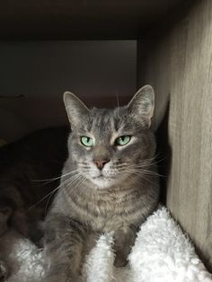 900 Cat Health Ideas In 2021 Cat Health Cats Pets